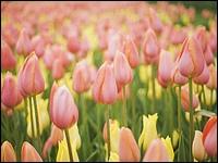 晴空下的鮮花(三) 1600*1200  12 - [wall001.com]_Blue_Sky_and_Flowers_1600x1200_HM151_350A.jpg